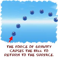 The force of gravity causes the ball to return to the surface.